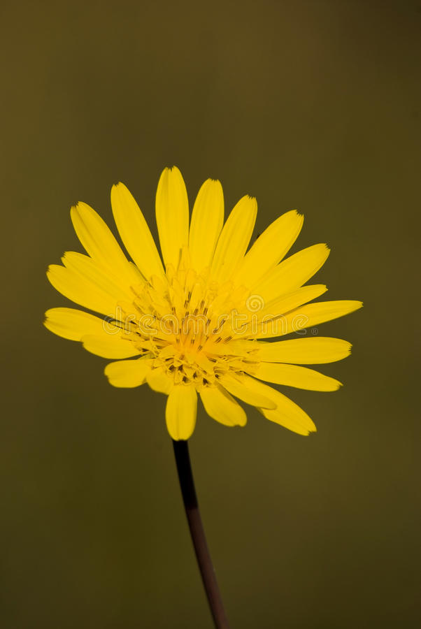 Mooie gele bloem royalty-vrije stock foto's