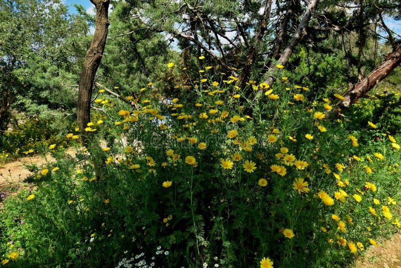 Mooie gele bloemen in de bosclose-up royalty-vrije stock foto