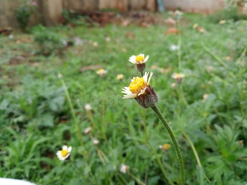 Mooie Gele bloemen in regenachtig seizoen stock afbeeldingen