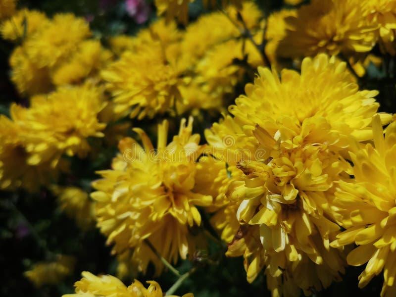 Mooie gele bloemen voor achtergronden royalty-vrije stock fotografie