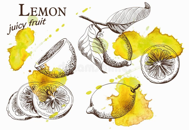 Mooie gele citroen stock illustratie