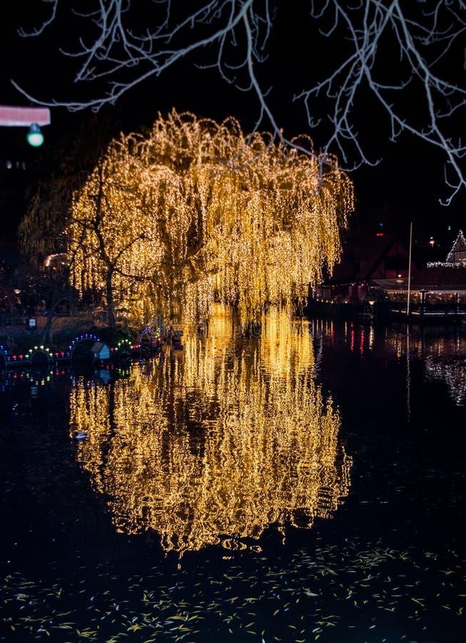 mooie Gele lampen verlichte boom stock afbeelding
