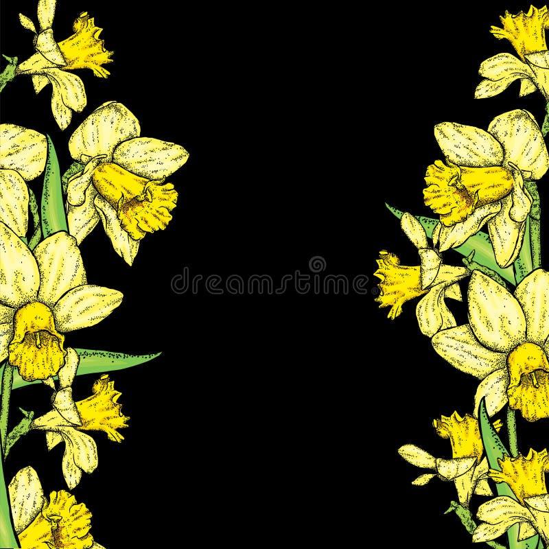 Mooie gele narcissen Vector illustratie Boeket van de lentebloemen stock illustratie