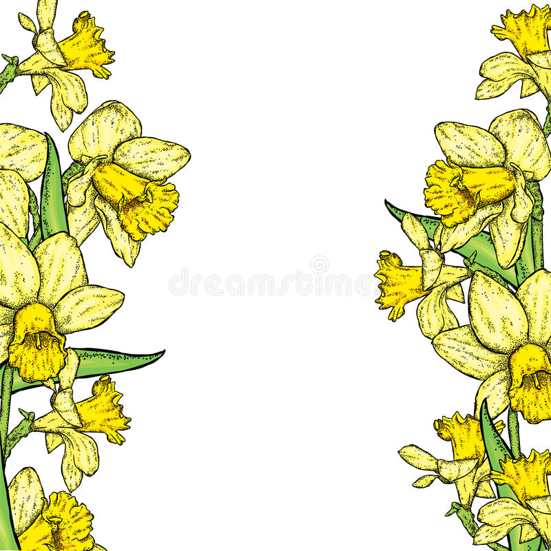Mooie gele narcissen Vector illustratie Boeket van de lentebloemen royalty-vrije illustratie