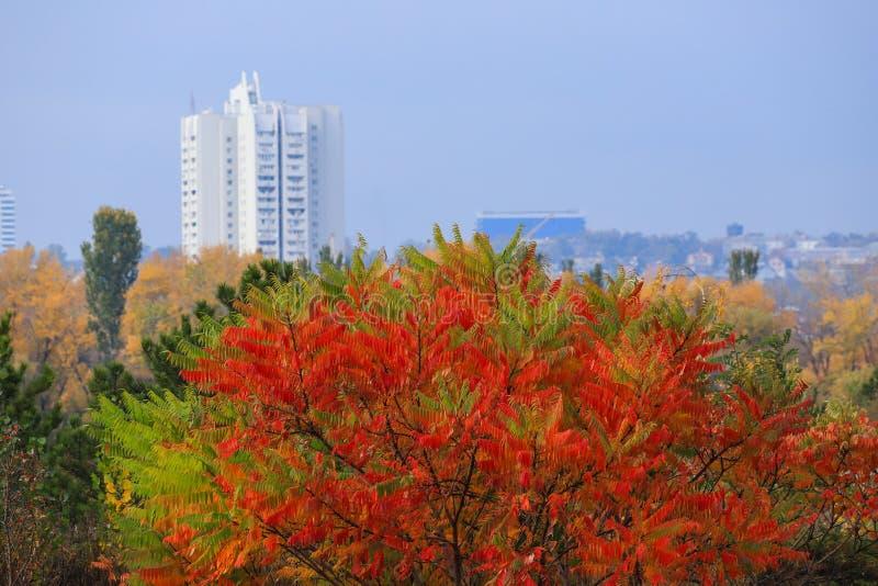 Mooie gele, rode en groene de herfstboom op de achtergrond van een hoge witte wolkenkrabber in de herfst in de Dniepr, de Oekraïn stock fotografie