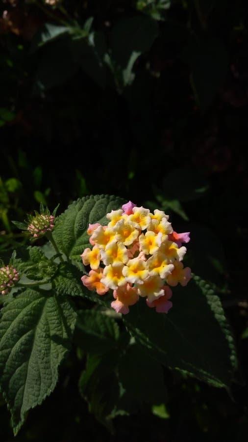 Mooie Gele Roze bloemen royalty-vrije stock afbeelding