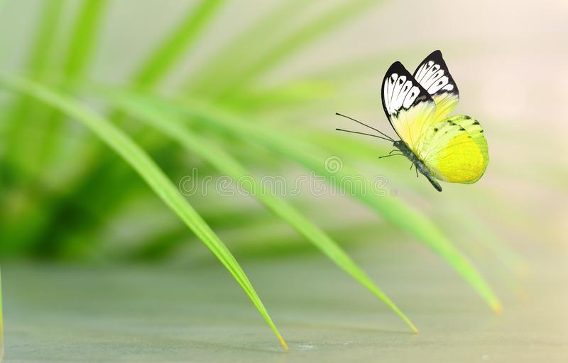 Mooie gele vlinderzitting op groene bladeren stock fotografie