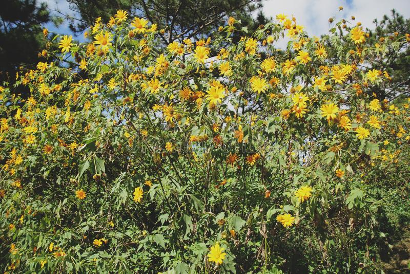 Mooie gele wilde zonnebloemen in zonnige dag stock foto's