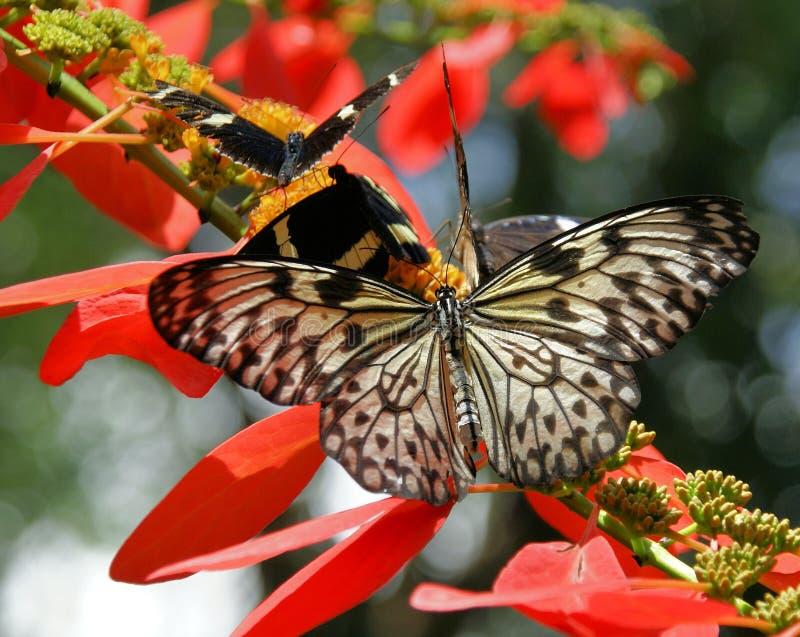 Mooie Gele of Witte Vlinder royalty-vrije stock foto