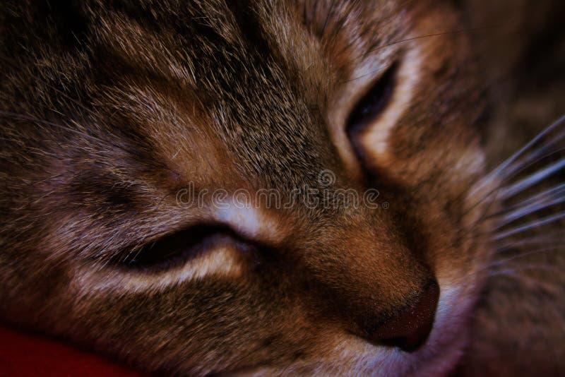 Mooie genoemde Tabby Cat Wilg het gevangen dutten stock fotografie