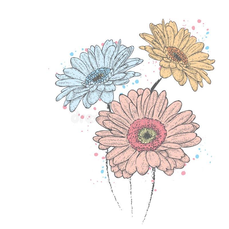 Mooie Gerbera Bloemen vector illustratie