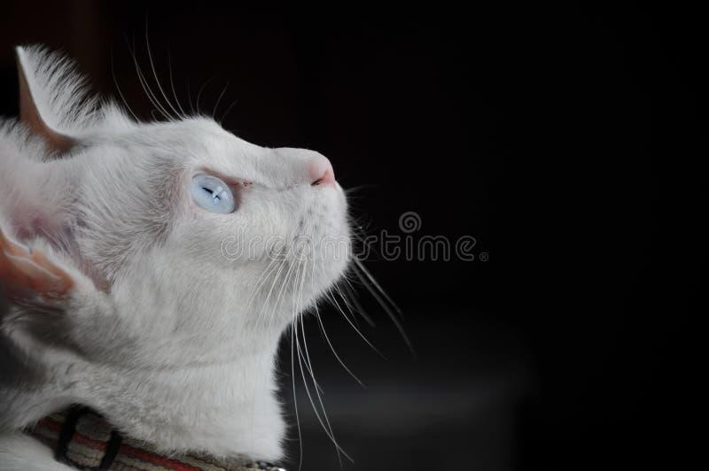 Mooie gestreepte katkat, blauwe ogen, zitting en binnenshuis comfortabel het ontspannen van openlucht royalty-vrije stock afbeelding