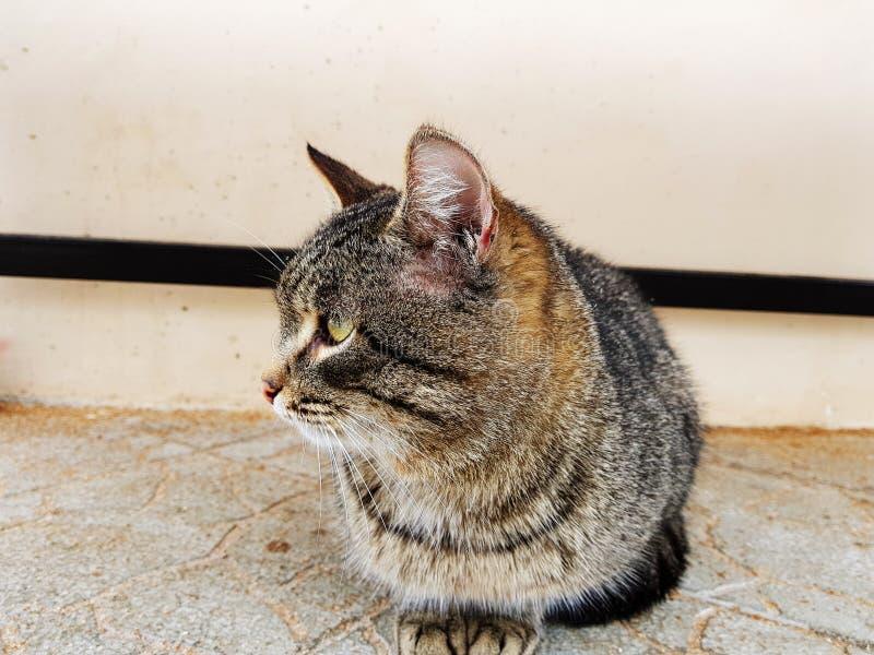 Mooie gestreepte kattenzitting op de straat stock fotografie