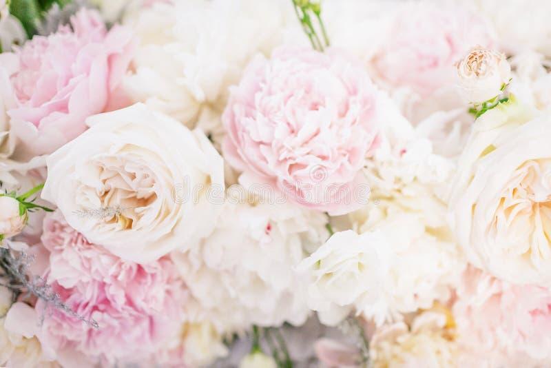 Mooie gevoelige pioenbloemen Bloemenachtergrond, lichtrose, zachte kleur stock afbeeldingen