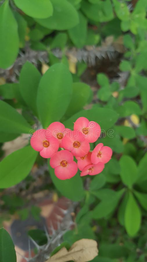 Mooie gezwollen de lentebloemen stock afbeeldingen