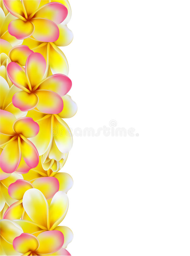 Mooie giftkaart met gele en roze plumerias stock foto