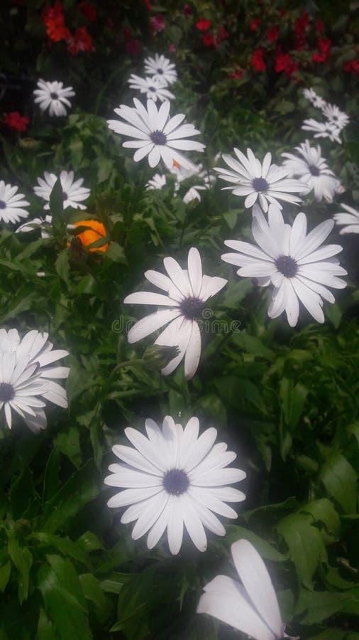 Mooie glanzende witte kleurenbloem royalty-vrije stock afbeeldingen