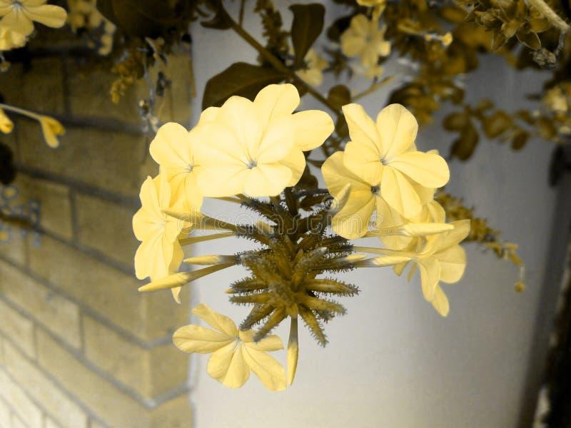 Mooie gouden bloemen in een echt sprookje! stock afbeelding