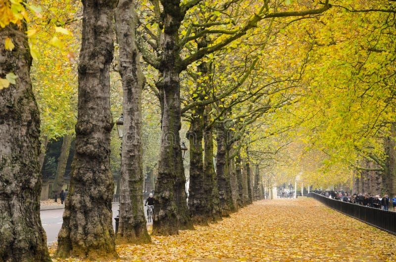 Mooie gouden de herfstbomen in Hyde-park, Londen royalty-vrije stock afbeelding