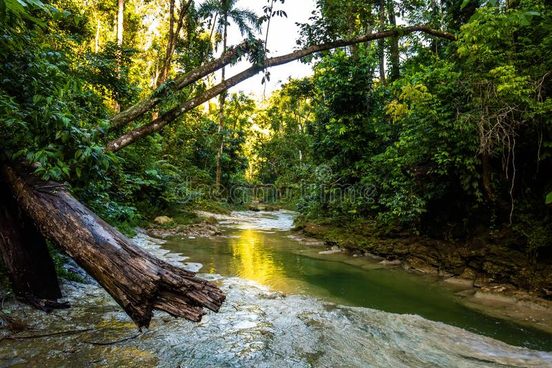Mooie Gozalandia-Waterval in San Sebastian Puerto Rico stock foto's