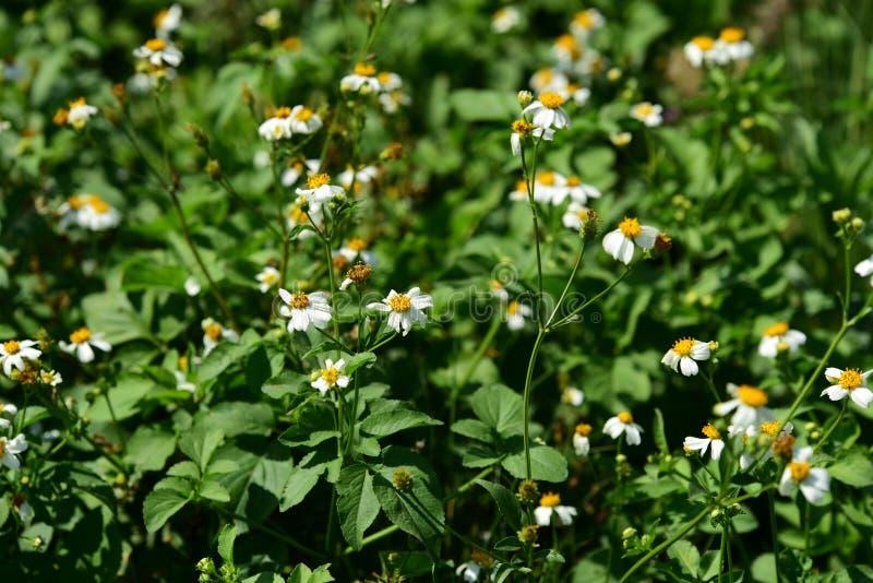 Mooie grasbloemen in heldere zonneschijn Gebruik als achtergrond royalty-vrije stock fotografie