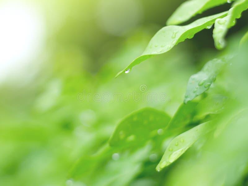 Mooie groen doorbladert en waterdrop achtergrond en abstracte textuur voor behang en vreedzaam stock afbeelding
