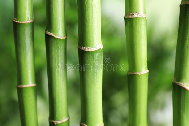 Mooie groene bamboestammen royalty-vrije stock foto's