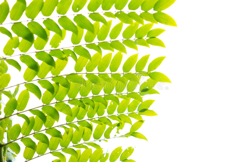 Mooie groene bladeren als achtergrond stock fotografie