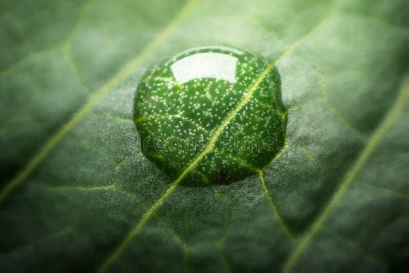 Mooie groene bladtextuur met dalingen van water Zeer ondiep F stock afbeelding