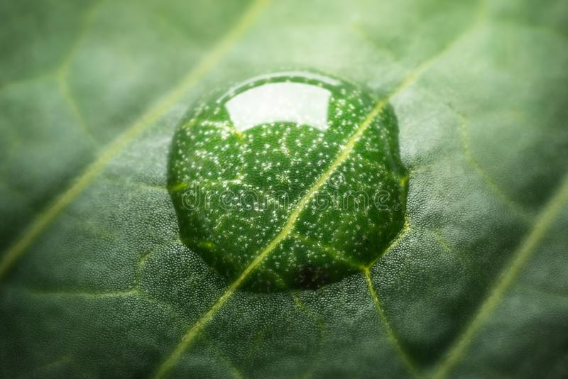 Mooie groene bladtextuur met dalingen van water Zeer ondiep F royalty-vrije stock foto