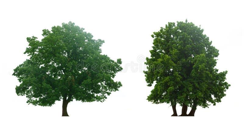 Mooie groene bomen royalty-vrije stock afbeeldingen