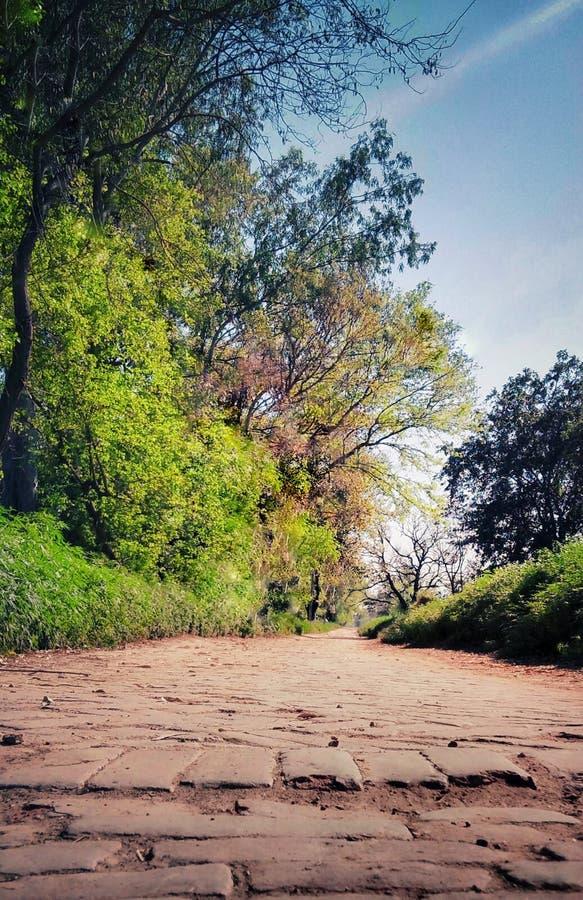 Mooie Groene boom en Weg stock foto