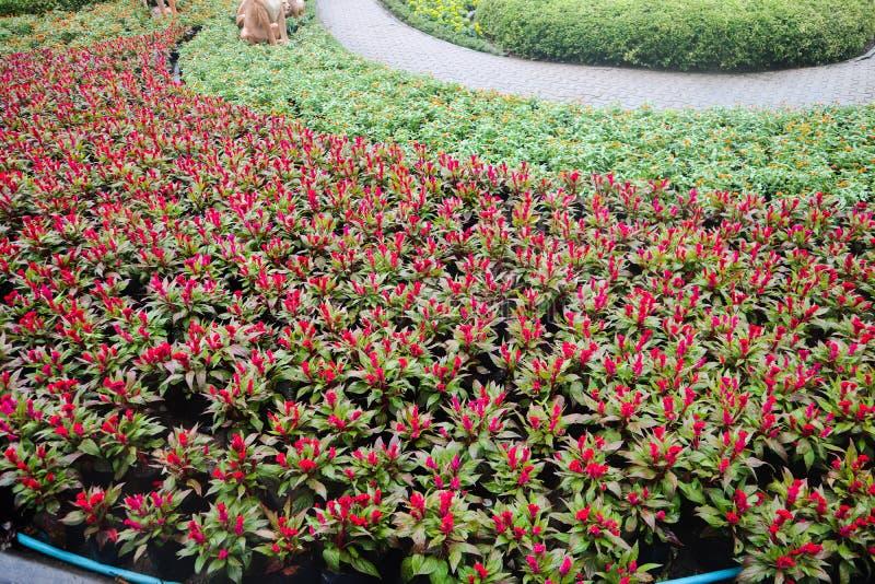 Mooie groene boom, installaties, bossteen en bloemen in de openluchttuinen en de openbare parken stock foto's