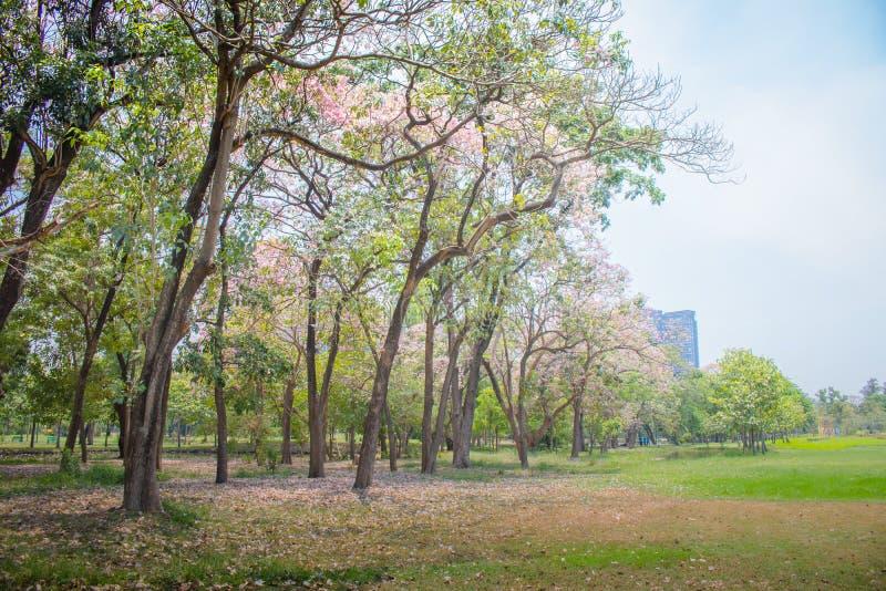 Mooie groene gazon en bomen met blauwe hemel in openbaar park stock foto