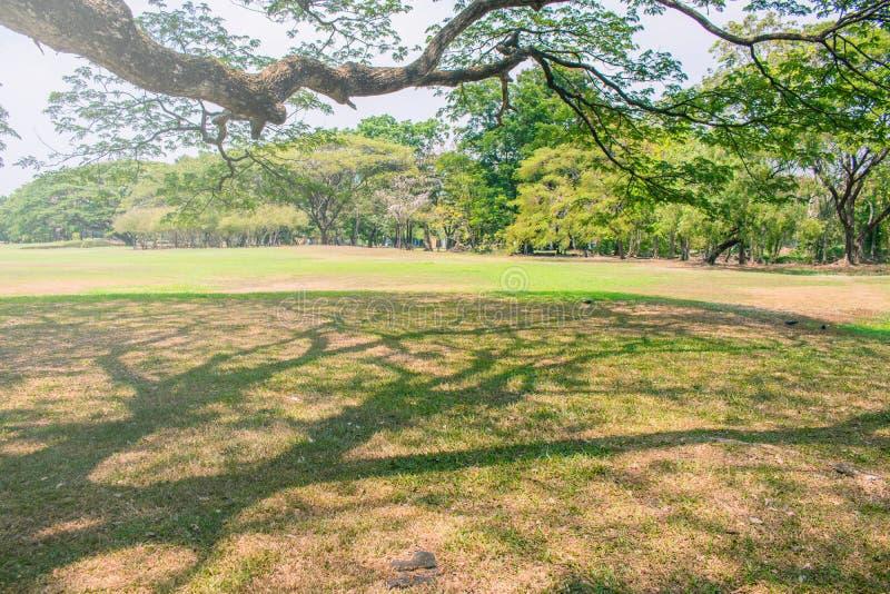 Mooie groene gazon en bomen met blauwe hemel in openbaar park royalty-vrije stock foto's