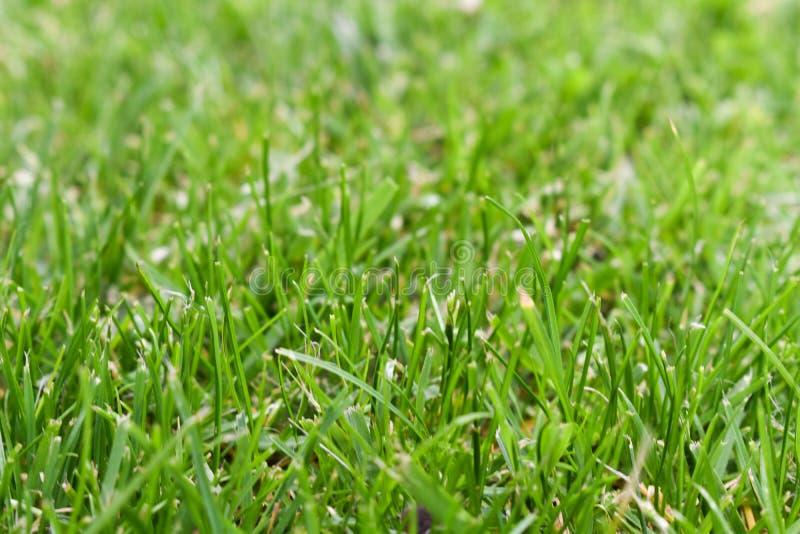 Mooie groene grasachtergrond tijdens de lente Close-up van gazon wordt geschoten dat royalty-vrije stock foto's