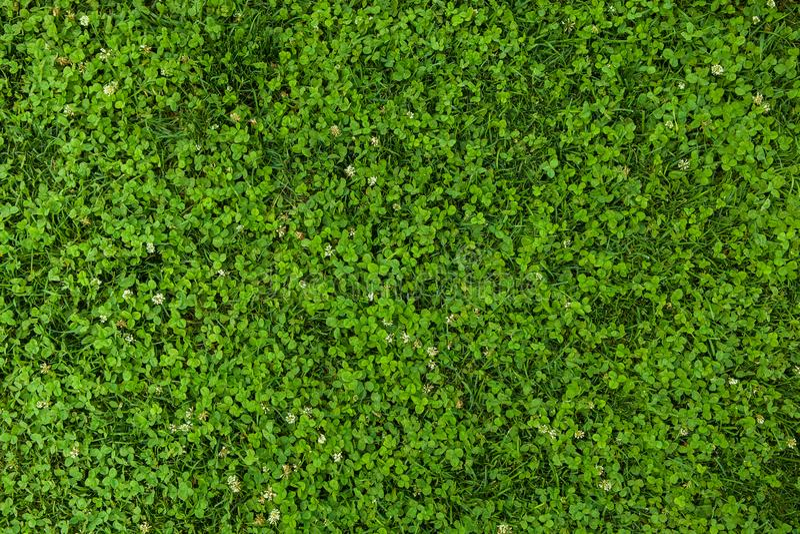 Mooie groene grastextuur stock foto