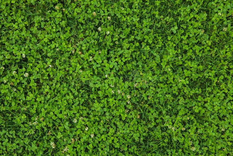Mooie groene grastextuur royalty-vrije stock foto's