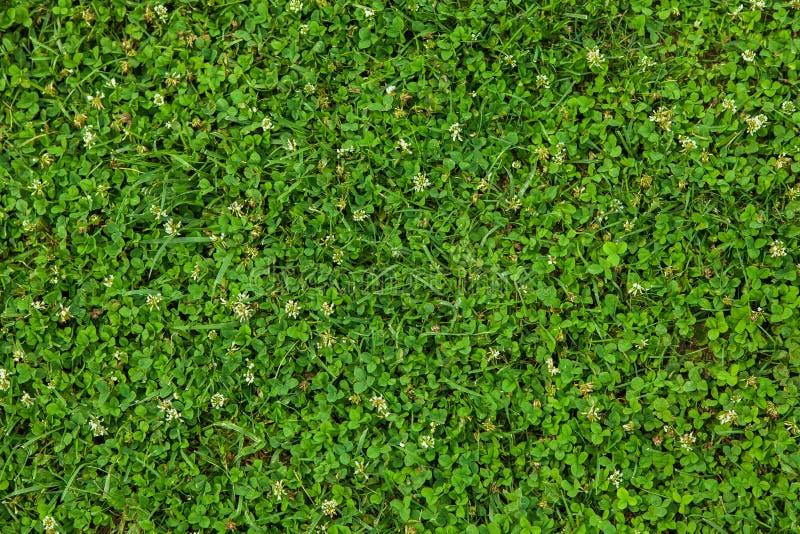 Mooie groene grastextuur royalty-vrije stock fotografie