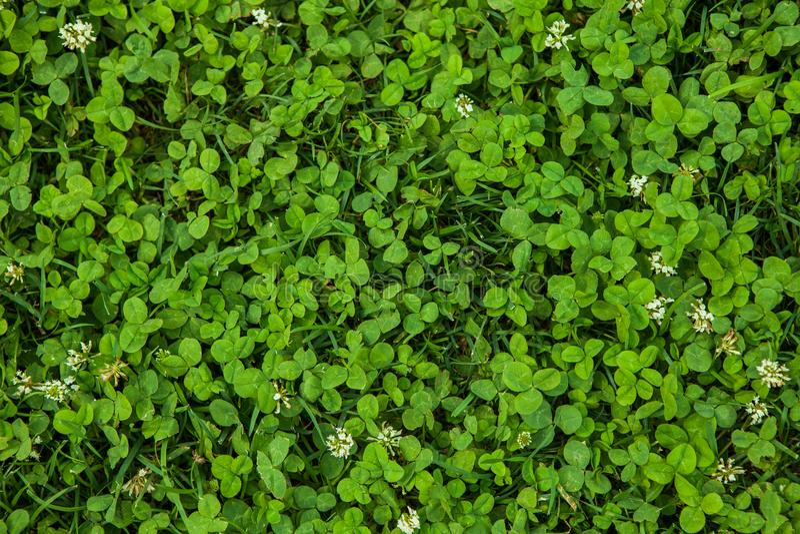 Mooie groene grastextuur stock fotografie