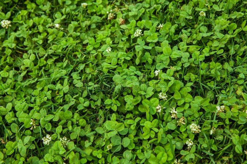 Mooie groene grastextuur royalty-vrije stock foto
