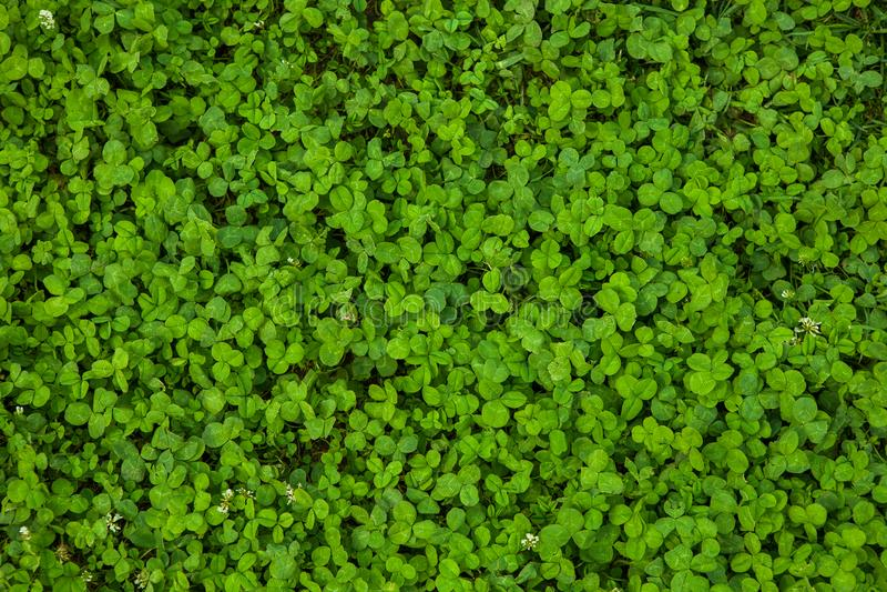 Mooie groene grastextuur stock afbeelding