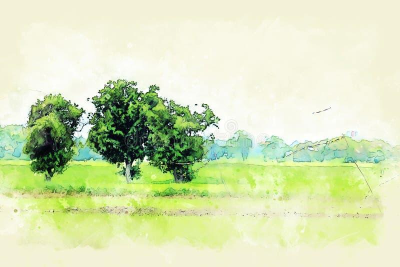 Mooie groene kleur bij Padievelden en de illustratie van de boomwaterverf het schilderen vector illustratie