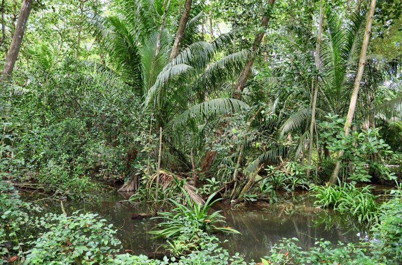 Mooie groene regenwoudschoten in verschillende plaatsen op de Seychellen stock foto