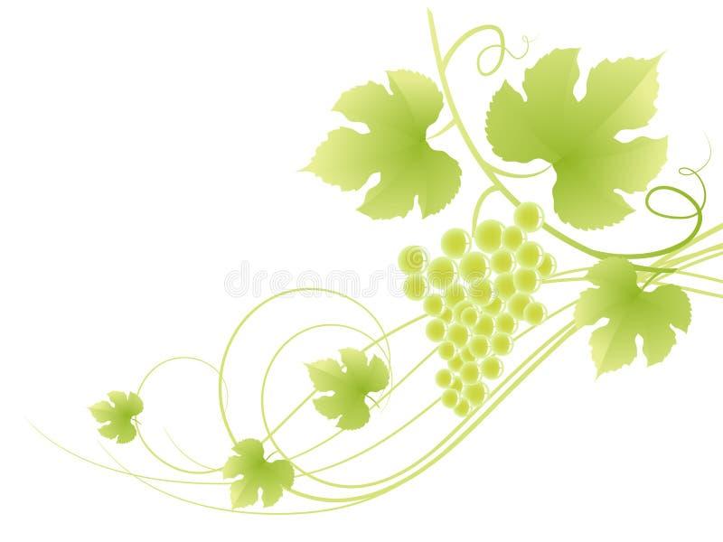 Mooie groene wijnstokachtergrond. stock illustratie