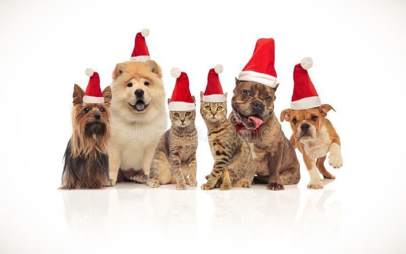 Mooie groep bruine katten en honden die santahoeden dragen stock fotografie