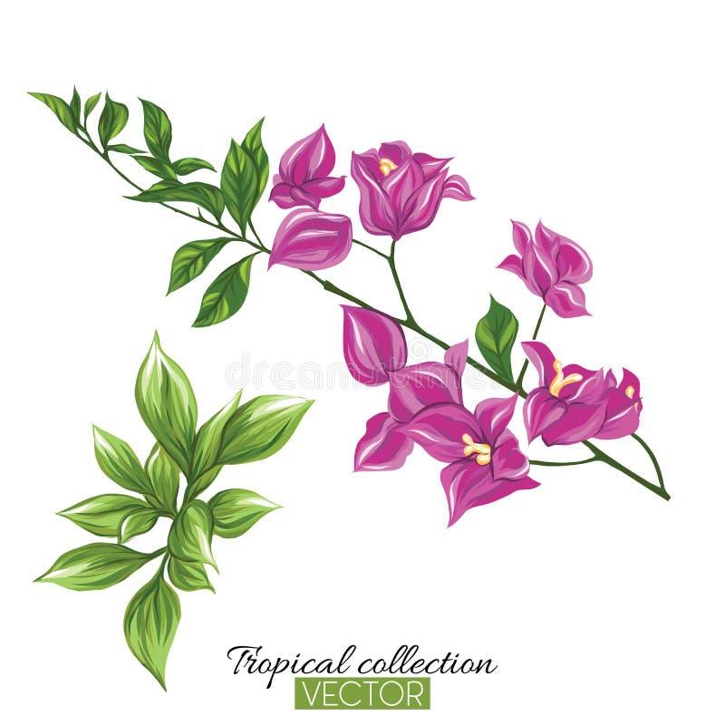 Mooie hand getrokken botanische vectorillustratie met bougainv stock illustratie