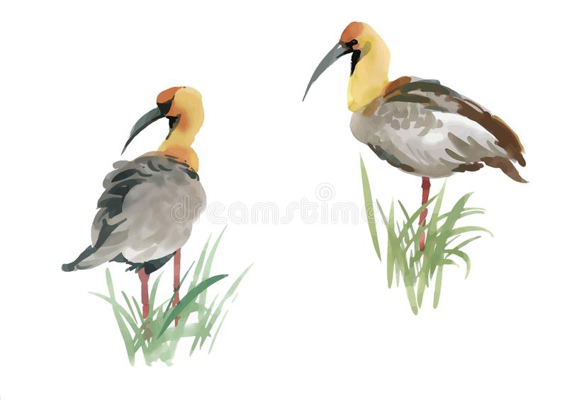 Mooie hand getrokken grijze vogels in gras op witte achtergrond, waterverf het schilderen royalty-vrije illustratie