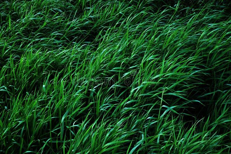 Mooie heldergroene hoge grasachtergrond Kleurrijke aard stock foto