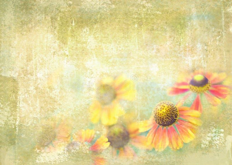 Mooie Helenium-bloemen die in de de zomertuin groeien Bloemen prentbriefkaar stock foto's